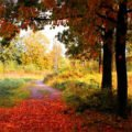 Любимое время года — осень