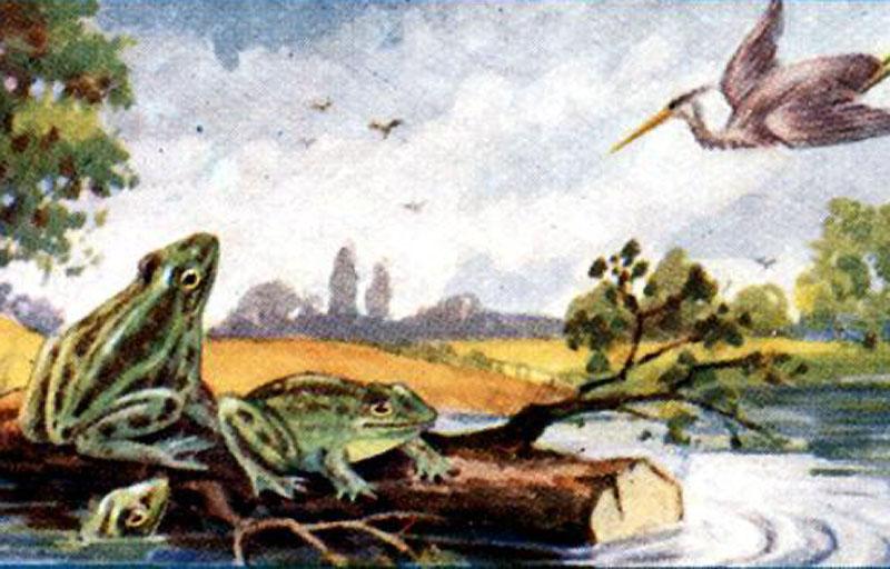 Басня Лягушки просящие царя