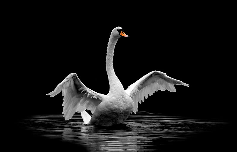 Не стреляйте белых лебедей. Аргументы к сочинению