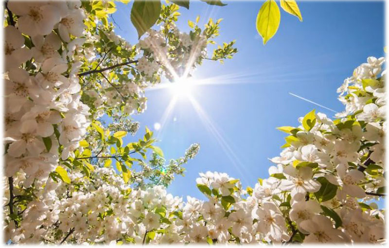 Мое любимое время года весна