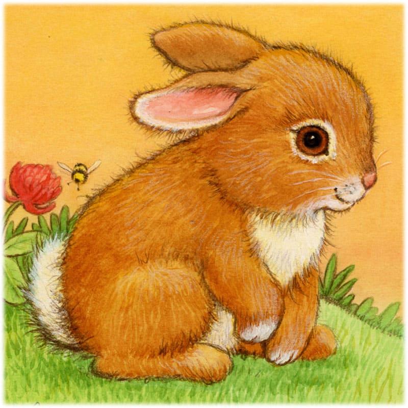 Сочинение мое любимое животное кролик