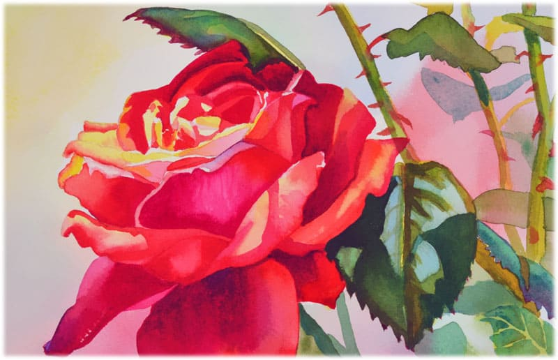 Мой любимый цветок роза
