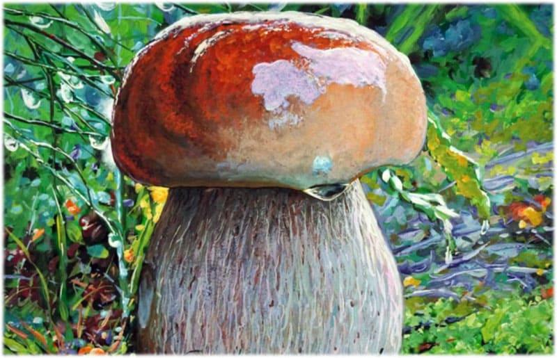 Сочинение как я однажды нашел белый гриб